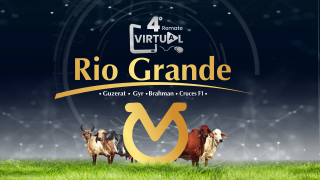 4° Remate Virtual Rio Grande