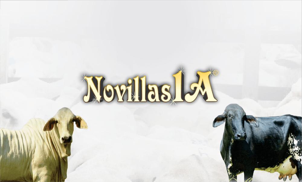 Novillas 1A