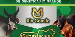 Banner-50-toros-riogrande